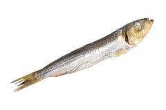 Изолированная еда рыб Стоковое Фото