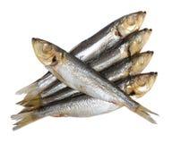 Изолированная еда рыб Стоковая Фотография