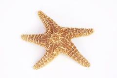 изолированная звезда моря Стоковое Фото