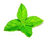 изолированная мята листьев Стоковое фото RF