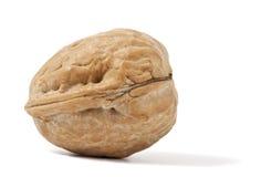 изолированная предпосылкой белизна грецкого ореха фото макроса Стоковые Изображения