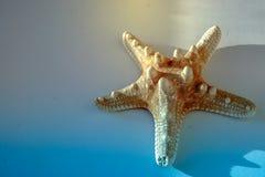 изолированная предпосылкой белизна starfish Закройте вверх по фото стоковое изображение rf