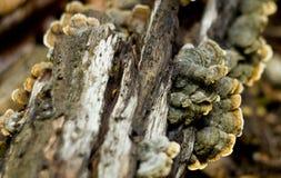 изолированная пуща величает белизна Грибы на дереве в лесе стоковое изображение rf