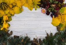 изолированная рамка осени красивейшая выходит реальная белизна Стоковое фото RF
