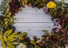изолированная рамка осени красивейшая выходит реальная белизна Стоковые Фотографии RF