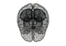 Изолированная светокопия †эскиза мозга «- бесплатная иллюстрация