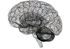 Изолированная светокопия †эскиза мозга «- иллюстрация штока
