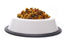 изолированная собака тарелки Стоковые Изображения