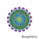 Изолированная структура частицы вируса Bunya Стоковое Изображение RF