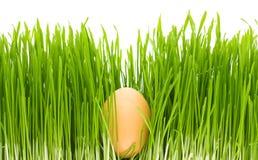 изолированная трава яичка Стоковая Фотография RF