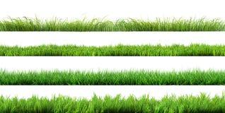 Изолированная трава стоковые изображения rf