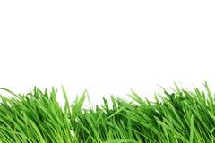 изолированная трава иллюстрация штока