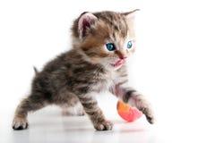 изолированная шариком игра котенка Стоковое Фото