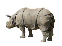 изолированная b белизна rhinoceros Стоковые Изображения RF