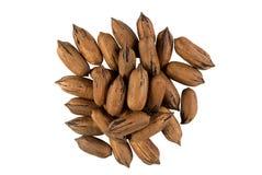 изолированная nuts белизна пекана Стоковая Фотография RF