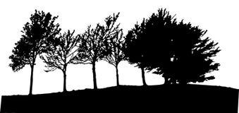 Изолированное дерево Стоковое фото RF