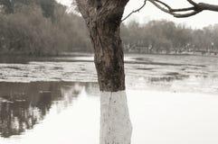 Изолированное покрашенное дерево в зеленом озере Стоковое фото RF
