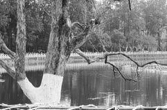 Изолированное покрашенное дерево в зеленом озере Стоковая Фотография RF