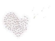 изолированное сердце одуванчика осеменяет белизну Стоковое Изображение RF