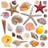 Изолированное собрание Seashell Стоковые Фотографии RF