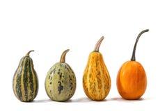 4 изолированной тыквы разных видов и цветов Стоковое Изображение