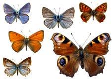 изолированные бабочки Стоковые Изображения