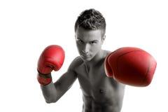 изолированные боксером детеныши студии человека Стоковые Фото