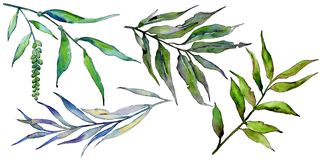 Изолированные ветви вербы в стиле акварели Стоковая Фотография RF