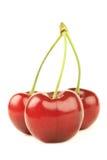 изолированные вишни Стоковое Изображение RF