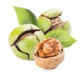 Изолированные грецкие орехи стоковая фотография rf
