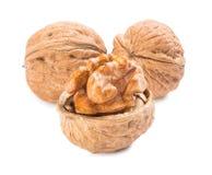 Изолированные грецкие орехи стоковое изображение