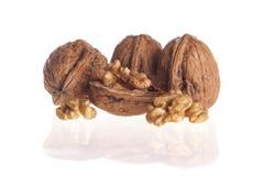 Изолированные грецкие орехи стоковая фотография