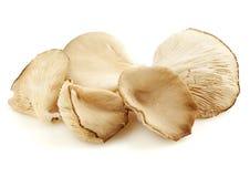 Изолированные грибы устрицы Стоковые Изображения RF