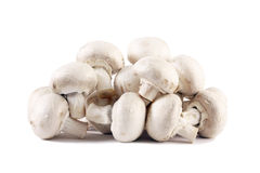 изолированные грибы Стоковое Изображение RF