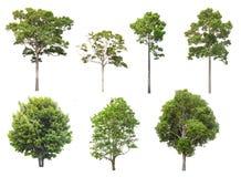 Изолированные деревья на белой предпосылке, собрание деревьев стоковое фото rf