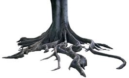 изолированные корни Стоковое фото RF