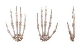 Изолированные косточки человеческой руки каркасные стоковые изображения rf