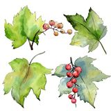 Изолированные листья смородины в стиле акварели Стоковые Фотографии RF
