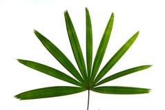 изолированные листья Стоковые Фото