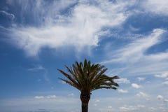 Изолированные пальма и листья Стоковые Изображения RF