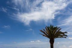 Изолированные пальма и листья Стоковые Изображения