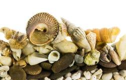 Изолированные раковины моря Стоковые Изображения