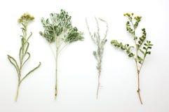 изолированные травы Стоковые Фото