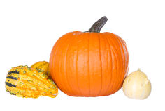 Изолированные тыквы и gourds стоковые фотографии rf