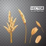 Изолированные уши и семя пшеницы Зерно земледелия желтый цвет обоев вектора уравновешивания rac померанцовой картины цветков eps1 Стоковая Фотография RF