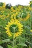 изолированные цветки греют на солнце белизна Стоковые Фотографии RF