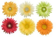 изолированные цветки Стоковое Изображение