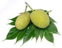 Изолированные Breadfruit Стоковые Изображения RF