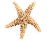 изолированные starfish Стоковые Изображения RF