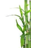 изолированный бамбук Стоковое фото RF